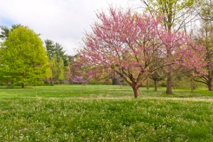 Spring time in Kentucky